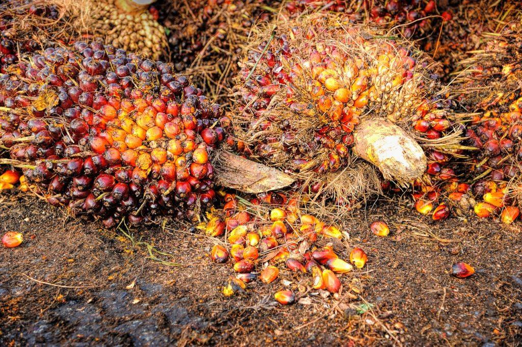 olio di palma - frutti